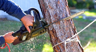 How To Tree Trim in Fort Worth Texas